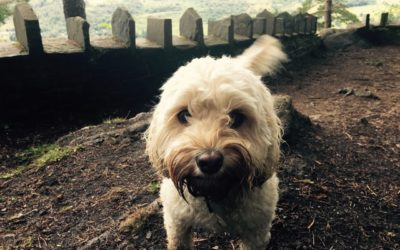 Kimber's Top Three Kenmore Walks